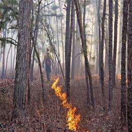prescribed burn image_sized.jpg